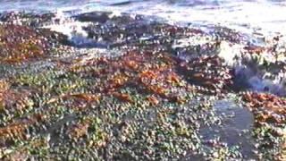 Semester i Haugesund,Norge Juli 1996,vågor slår mot klipporna havet,blåsigt,hård vind(7,1Mbit)