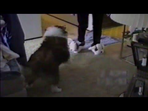 Dog Attack Dog Slippers
