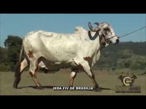 LOTE 67   IEDA FIV DE BRASILIA