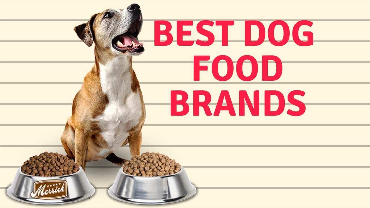 Best Premium Dog Food Brands
