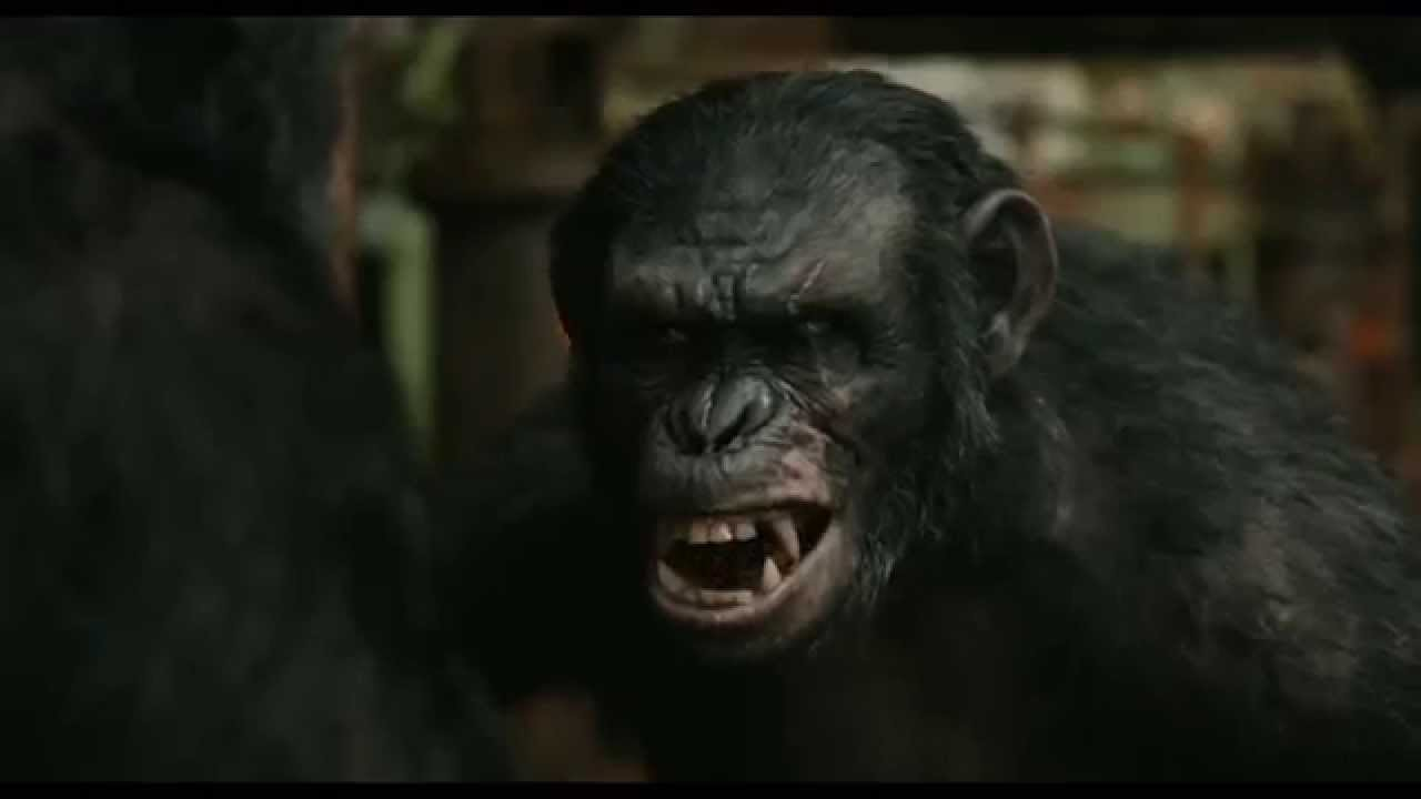 Caesar Loves Humans More Than Apes! - YouTube