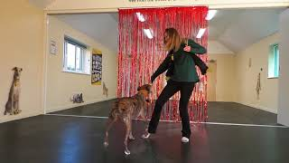 Dancing with Dogs - Dogs Trust Shoreham