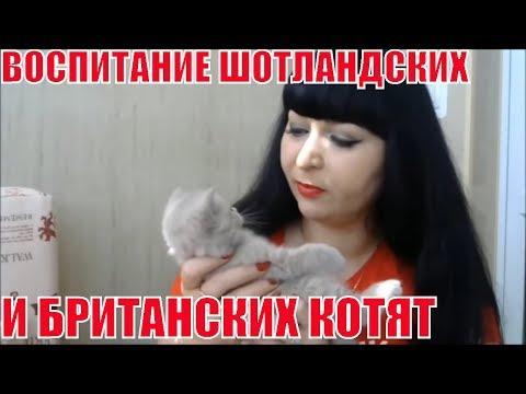 Как воспитывать котенка 4 месяца