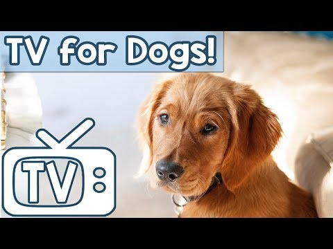Dog TV: TV for Dogs to Watch and Relax to! Squirrels and Birds in the Grass Entertainment for Dogs!