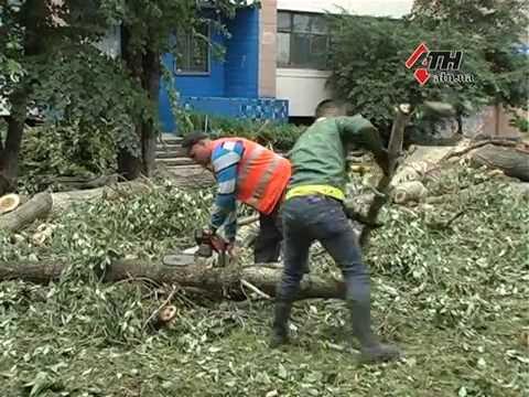 Вопрос: Зачем в Харькове уродуют деревья?