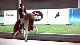 Ice Horse Eindhoven 2017