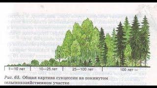 Саморазвитие экосистемы. Биология 9 класс.