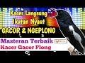 Pancingan Kacer Macet Malas Bunyi Pagi Siang Sore Malam Di Jamin Bunyi Gacor  Mp3 - Mp4 Download