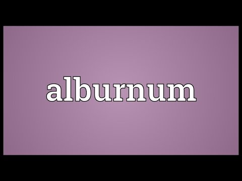 Header of alburnum