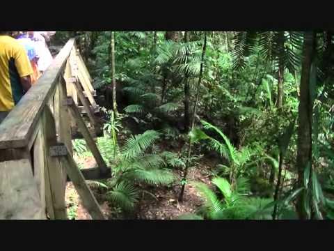 Rain Forest, Daintree National Park -- Australia