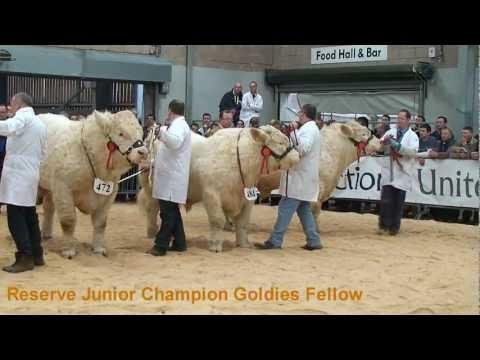Charolais Judging Sterling Feb 2012 (Perth Bull Sales)