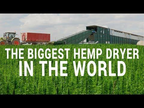 The Biggest Hemp Dryer In The World – Cannabis Harvest