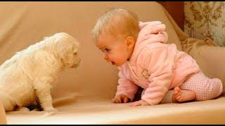 Funny Dogs   A Funny Dog Videos   Compilation 2015   Full HD