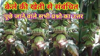 केले की खेती से संबंधित पूंछे जाने वाले सभी प्रश्नो का हल kela ki kheti in hindi