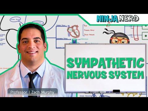Neurology | Sympathetic Nervous System