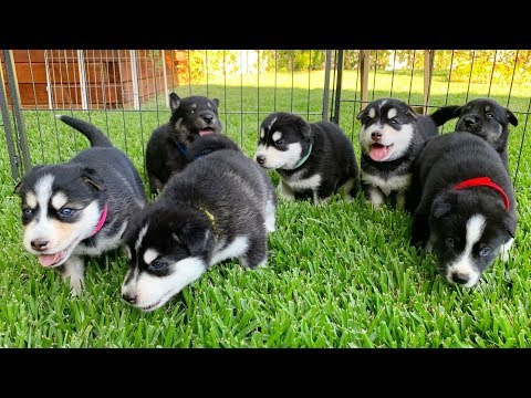 Puppies go outside for the First Time!