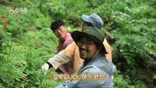 [新농사직설 18회] 평창산양삼