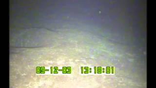Alamagan Island | Cruise OES0307 | ALA03005