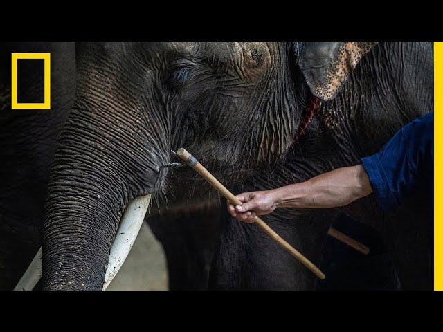 Inside the Dark World of Captive Wildlife Tourism   National Geographic