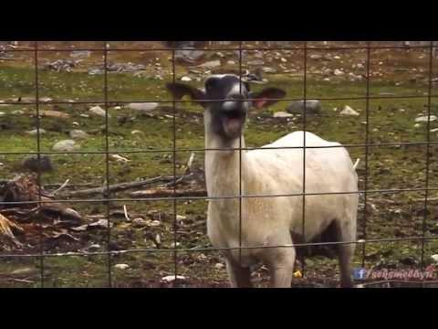 top siteuri de társkereső online társkereső szörnyű