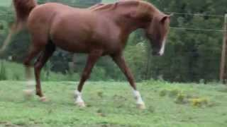 Sojourn Arabian Horse Farm