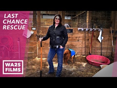 Survive The Amazing Bachelorette - 12 Guys 30 Days! LAST CHANCE RESCUE Stories From The Devoted Barn