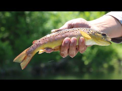 Watauga River Fly Fishing