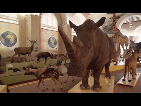 Musée d'Histoire Naturelle de Marseille - MY PROVENCE
