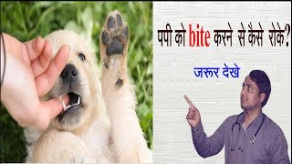 How to stop puppy biting in hindi ll dog and vet II Pet Care II