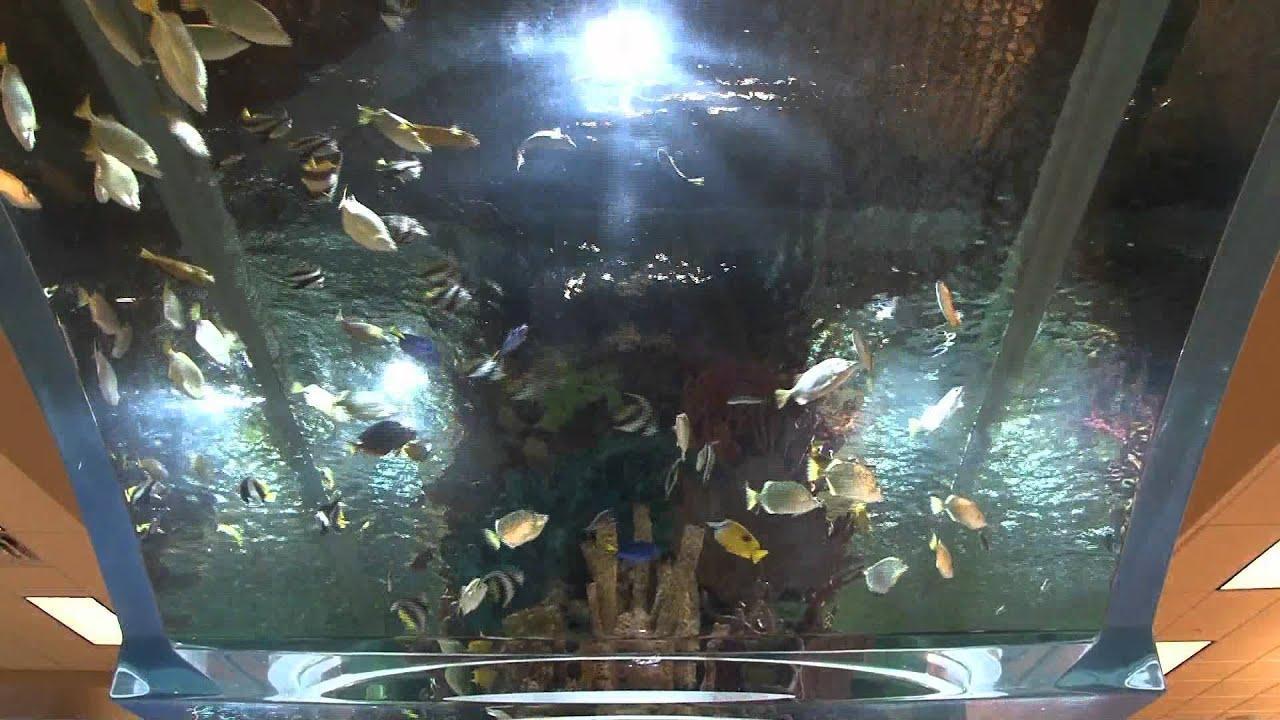 Fish aquarium utah - Fish Aquarium Utah