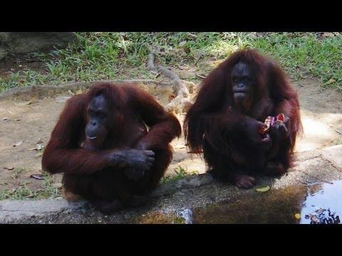 Zoo Negara - Malaysia 2013