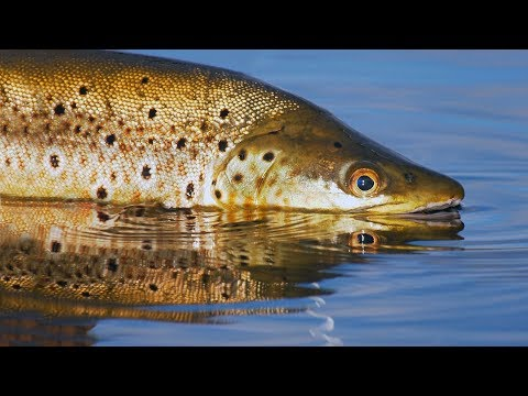 Tasmania, Australia Fly Fishing By Todd Moen