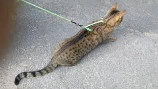 Кот и белка