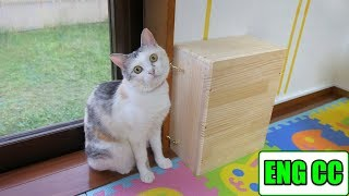 Cat room DIY & Entrance screen installation to eliminate hot air in the hallway【Eng CC】