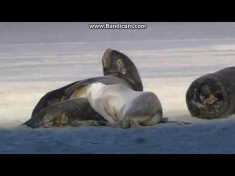 win7_scenic-demoshort_raw + Wildlife