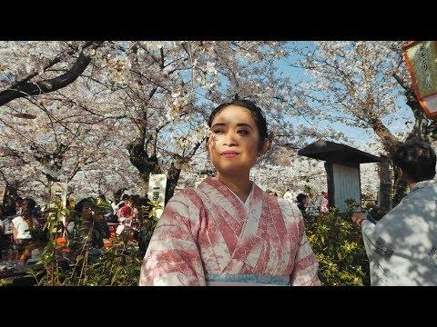 SAKURA DI KYOTO (JAPAN VLOG)