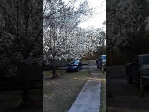 Chegada da Primavera em Jacksonville 24 de Fevereiro 2018