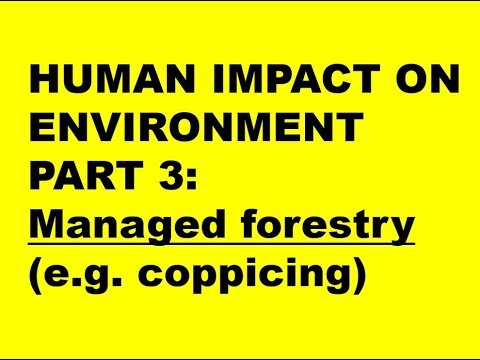 HUMAN IMPACTS ON ENVIRONMENT PART 3: Managed forestry e.g. coppicing (Exam 1)