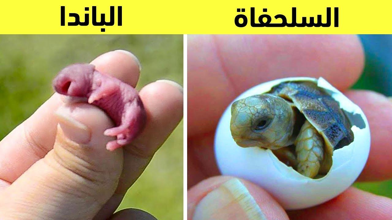 هناك الكثير من الحيوانات ذات أشكال مدهشة بعد الولادة مباشرة.. سبحان الله !