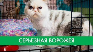 Серьезная кошка Ворожея   Фонд Умка