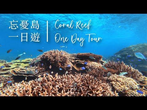 2021珊瑚礁忘憂島一日遊  | 澎湖民宿 | 撒野旅店
