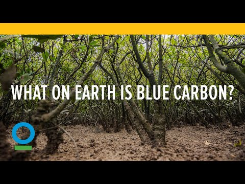 What on Earth is Blue Carbon?