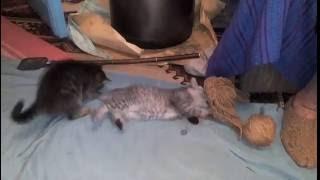 Васька Борька коты хулиганы