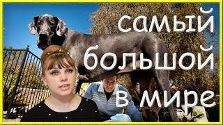 Это интересно! Кто же самый крупный из животных в мире?