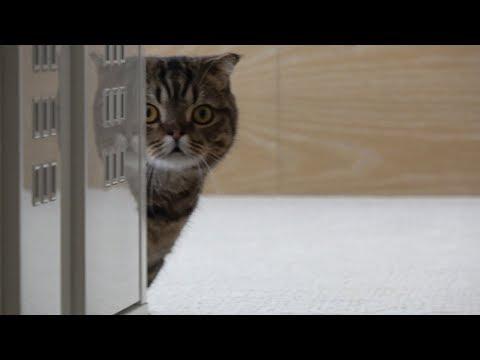 새로 데려 온 친구를 보고 쫄아버린 고양이