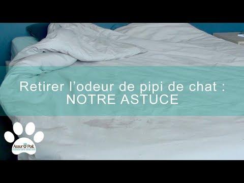 Comment Retirer L'odeur De Pipi De Chat ? | Assur O'Poil