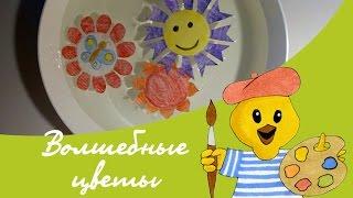 Видеоурок детям: рисуем бумажные цветы, которые распускаются сами на воде. Опыт с бумажными цветами.