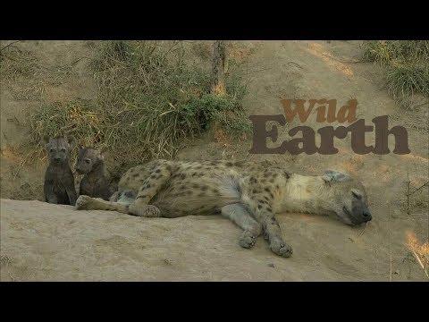 WildEarth - Sunset Safari - 17 May 2020