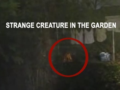 Real alien caught on tape? An alien or what? Ufo sightings ... Photos Of Real Ufos And Aliens