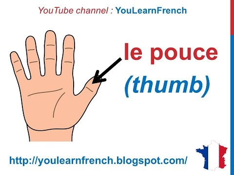 French Lesson 31 Body Vocabulary Finger Names Les Doigts De La Main Dedos De La Mano En Francés